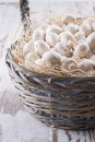 Mushrooms a close up photo of a edible known as agaricus in a basket on a bright solid background Stock Images