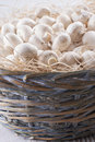 Mushrooms a close up photo of a edible known as agaricus in a basket on a bright solid background Stock Photography