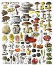 Mushrooms Collage, Autumn Forest Mushrooms Scene. Autumn Mushrooms View. Mushroom Collection Hand Drawn Illustrations. / Antique E