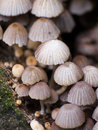 Mushrooms family Royalty Free Stock Photos