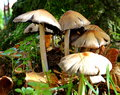Mushrooms family of that enjoys a green and wet grass Stock Photo