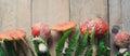 Mushrooms fly agaric
