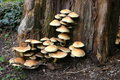 Mushrooms Galore Stock Images