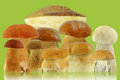 Mushrooms on a green background Royalty Free Stock Photo