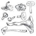 Mushrooms hand drawn vector sketch vegetable on white,