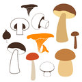 Mushrooms isolated objects on white background vector illustration eps Royalty Free Stock Photo