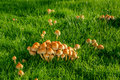 Mushrooms on a lawn green at autumn Royalty Free Stock Photography
