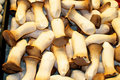 Mushrooms on the Market in Barcelona Royalty Free Stock Photos