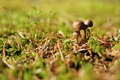 Mushrooms and moss Stock Images