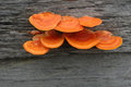 Mushrooms orange on the wood Royalty Free Stock Photo