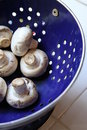 Mushrooms on a Plate Royalty Free Stock Photo