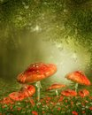 Mushrooms by a pond red fantasy Stock Image