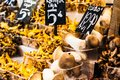 Mushrooms at a stand in the boqueria market in barcelona spain Royalty Free Stock Image
