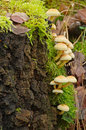 Mushrooms still life with forest Stock Image