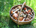 Mushrooms in straw basket on green grass Stock Image