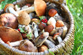 Mushrooms in straw basket on green grass Stock Photo