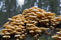 Mushrooms on a stump edible growing small depth of field Royalty Free Stock Photo
