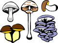 Mushrooms stylized color illustration of edible Stock Photos