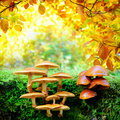 Mushrooms in sunny autumn forest Stock Photo