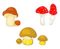 Mushrooms and toadstools vector icons of red amanitas Royalty Free Stock Photos