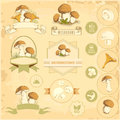 Mushrooms vegetables labels food product packaging design Royalty Free Stock Photo