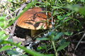 Mushrooms white mushroom mushroom moss forest vege vegetation Stock Photo