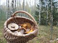 Mushrooms in wicker Stock Photography