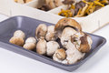 Mushrooms wooden box with different varieties of Stock Photography