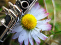 Music daisy Royalty Free Stock Photography