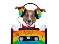 Music dog listening to from an old cassette of the s Stock Photo