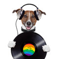 Music headphone vinyl record dog Royalty Free Stock Photo