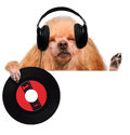 Music headphone vinyl record dog Royalty Free Stock Photo