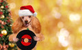 Music headphone vinyl record dog . Christmas. Royalty Free Stock Photo