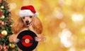 Music headphone vinyl record dog . Christmas. Royalty Free Stock Photo