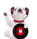 Music headphone vinyl record dog. Royalty Free Stock Photo