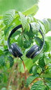 Music and life in my cool fresh audio tree green headset headphones ttzanzone thailand z f relax relaxing listen Stock Photography