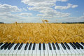 Music Wheat Field, Piano Keys ...