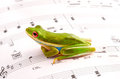 Musical frog Royalty Free Stock Image