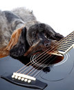 Musical instrument small doggie decorative thoroughbred dog puppy of the petersburg orchid shaggy doggie decorative doggie and Stock Image