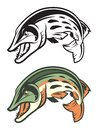 Muskellunge Fish Mascot in Color and Black & White