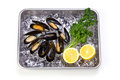 Mussel Stock Photos