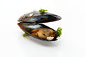 Mussel fresh with herbs and garlic on a white background Stock Photo