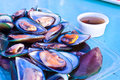 Mussel steamed mussels with a delicious sauce Stock Photography