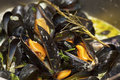 Mussels being cooked in buttery sause close-up Stock Image
