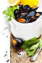 Mussels cooked with white wine sauce in a white pot Royalty Free Stock Image