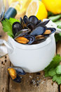 Mussels cooked with white wine sauce in a white pot Stock Photos