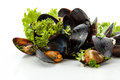 Mussels fresh with herbs and garlic on a white background Royalty Free Stock Photography