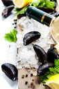 Mussels fresh on ice ready for cooking Royalty Free Stock Photos