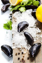 Mussels fresh on ice ready for cooking Stock Images