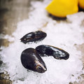 Mussels fresh on ice ready for cooking Stock Photos